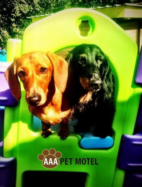 AAA Pet Motel - SA Accommodation