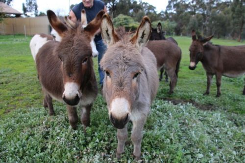 Donkey Tales Farm Cottages - SA Accommodation