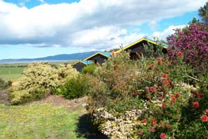 Black Cockatoo Cottages - SA Accommodation
