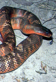 Armadale Reptile  Wildlife Centre - SA Accommodation