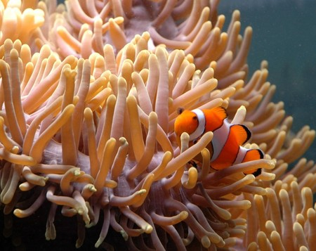 Reef HQ Great Barrier Reef Aquarium