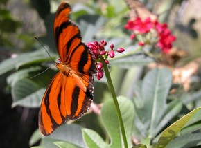 Butterfly Farm - SA Accommodation