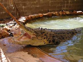 Wyndham Zoological Gardens and Crocodile Park - SA Accommodation