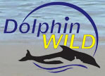 Dolphin Wild - SA Accommodation
