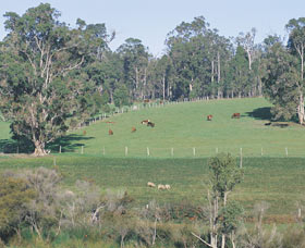 Scenic Drives - Bunbury Collie Donnybrook - SA Accommodation
