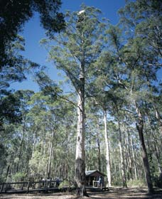 Diamond Tree Lookout Manjimup - SA Accommodation