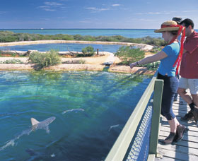 Shark Bay Marine Park - SA Accommodation