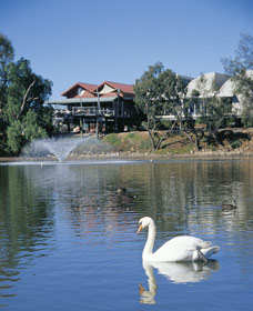 White Swans - SA Accommodation