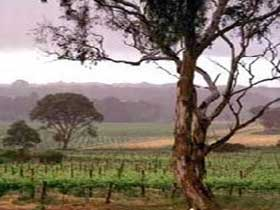 Yangarra Estate Vineyard - SA Accommodation