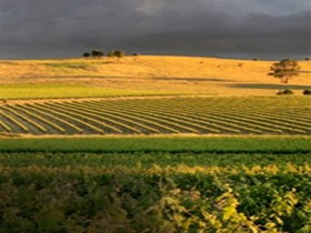 Kellermeister Wines - SA Accommodation