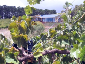 Zimmermann Wine - SA Accommodation
