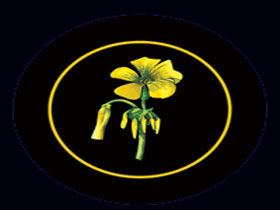 Battle of Bosworth Wines - SA Accommodation
