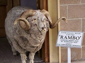 Tasmanian Wool Centre - SA Accommodation