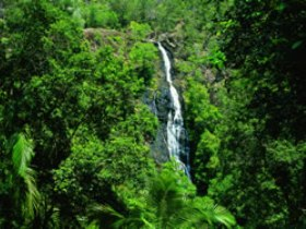 Kondalilla National Park - SA Accommodation