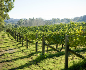 Surveyor's Hill Vineyards - SA Accommodation