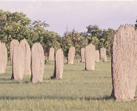 Magnetic Termite Mounds - SA Accommodation