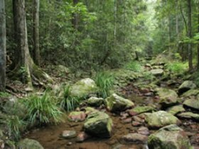 Amamoor State Forest - SA Accommodation