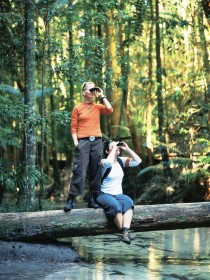 Birdwatching on the Fraser Coast - SA Accommodation