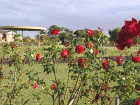 Elizabeth Park Rose Gardens - SA Accommodation