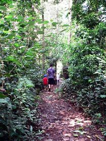 Malanda Falls Rainforest Walk Malanda Falls Conservation Park - SA Accommodation