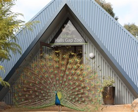 Halls Gap Zoo - SA Accommodation