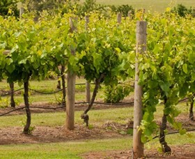 Mt Coghill Vineyard - SA Accommodation
