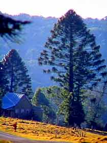 Bunya Mountains National Park - SA Accommodation