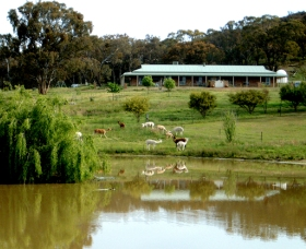 Clearview Alpacas - SA Accommodation