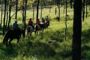 Hunter Valley Horse Riding and Adventures - SA Accommodation