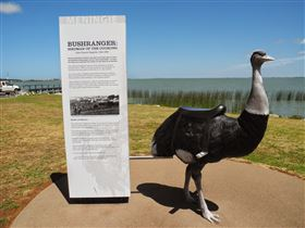 Birdman of the Coorong