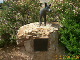 Dingo Statue - SA Accommodation