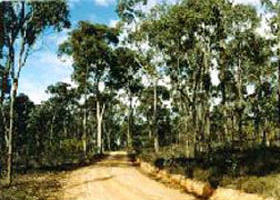 Paddys Ranges State Park - SA Accommodation