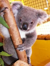 Cooberrie Park Wildlife Sanctuary - SA Accommodation