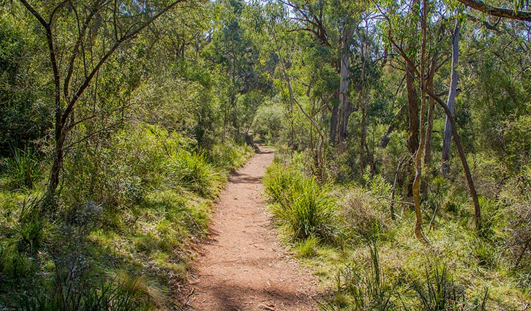 Mares Forest Creek walking track - SA Accommodation