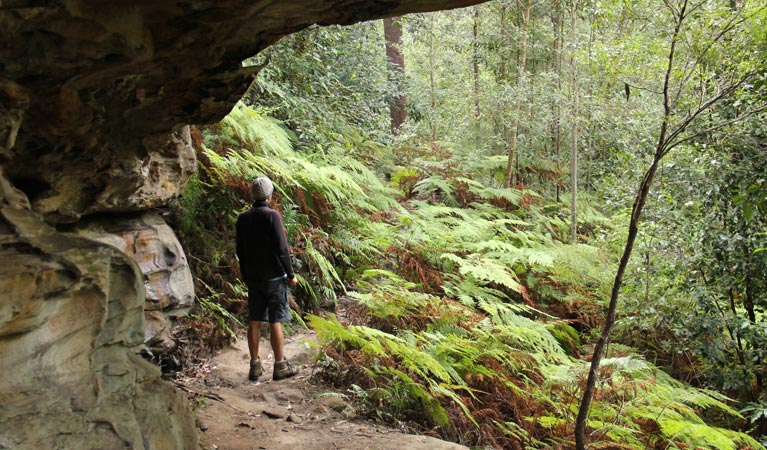 Dharug National Park - SA Accommodation
