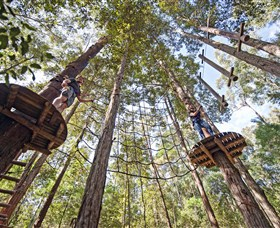 TreeTop Adventure Park Central Coast - SA Accommodation