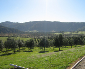Hastings Valley Olives - SA Accommodation