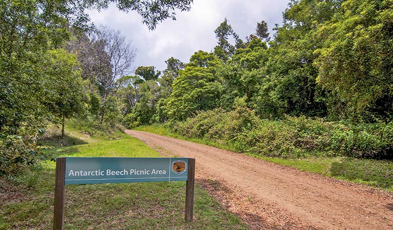 Antarctic Beech picnic area - SA Accommodation