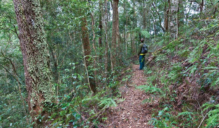 Blackbutt walking track