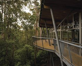 Tarkine Forest Adventures - Dismal Swamp - SA Accommodation