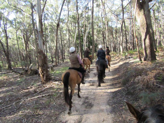 Silver Brumby Trails - SA Accommodation