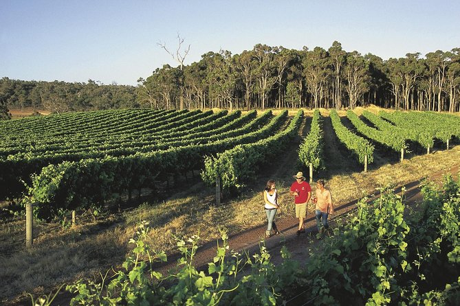 Margaret River Caves Wine and Cape Leeuwin Lighthouse Tour from Perth - SA Accommodation