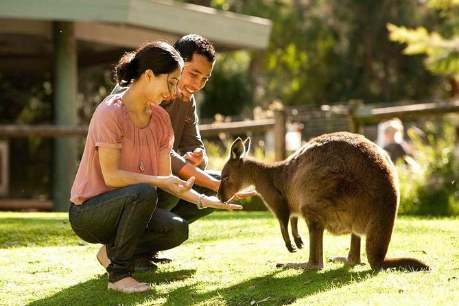 Very Best of Perth Tour - Wildlife Park  City Highlights Tour - SA Accommodation