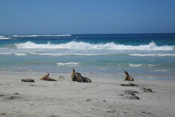 Kangaroo Island in a Day Tour from Adelaide - SA Accommodation
