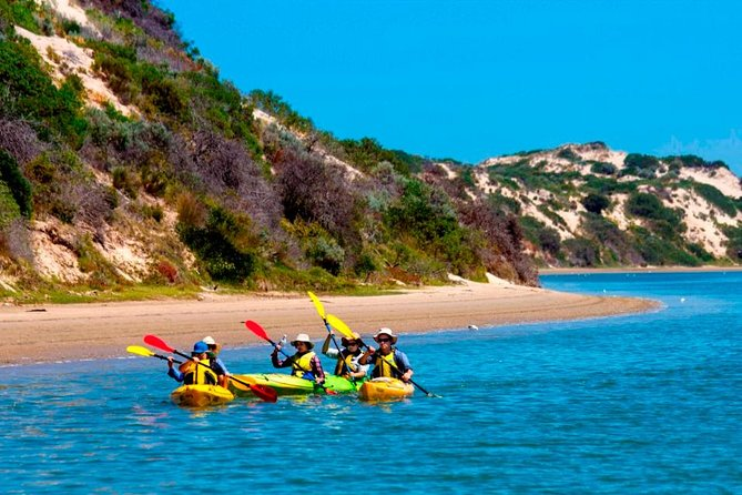 Half-Day Kayaking Tour in Coorong National Park - SA Accommodation
