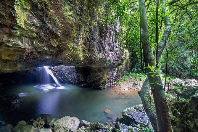 Springbrook and Tamborine Rainforest Tour Including Natural Bridge and Glow Worm Cave - SA Accommodation