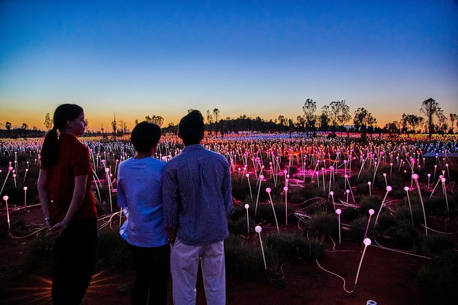 Uluru Field of Light Sunrise Tour - SA Accommodation