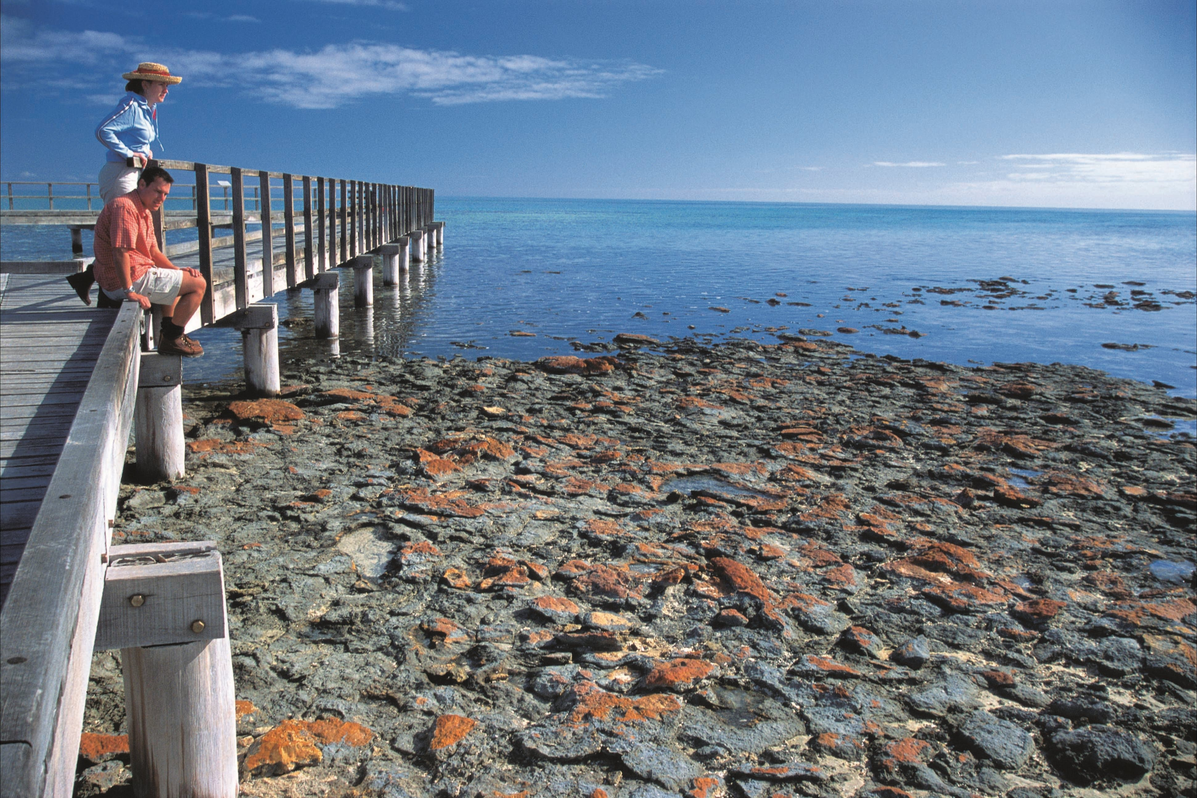 Hamelin Pool Stromatolites - SA Accommodation