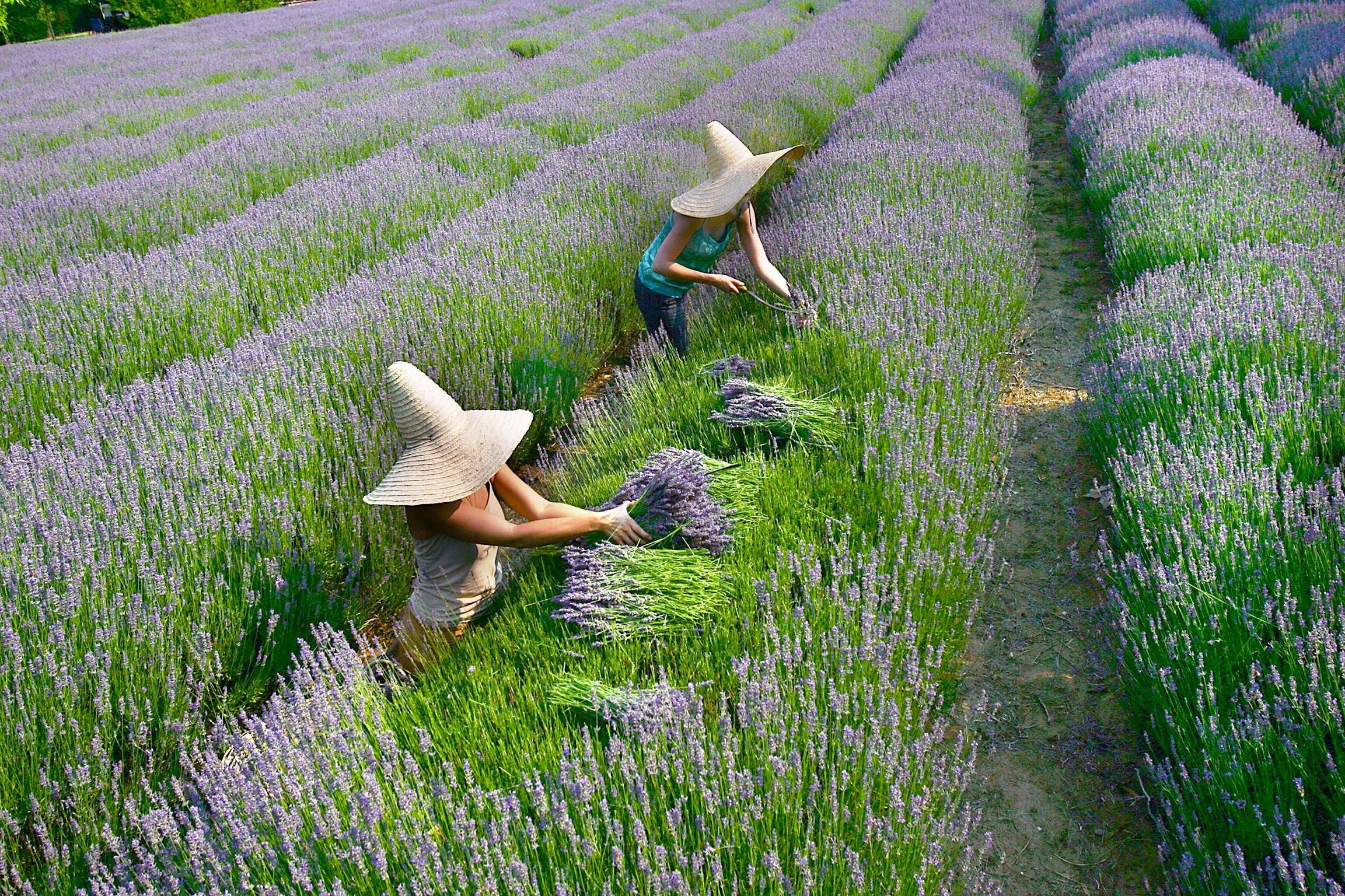 Lavandula Swiss Italian Farm - SA Accommodation