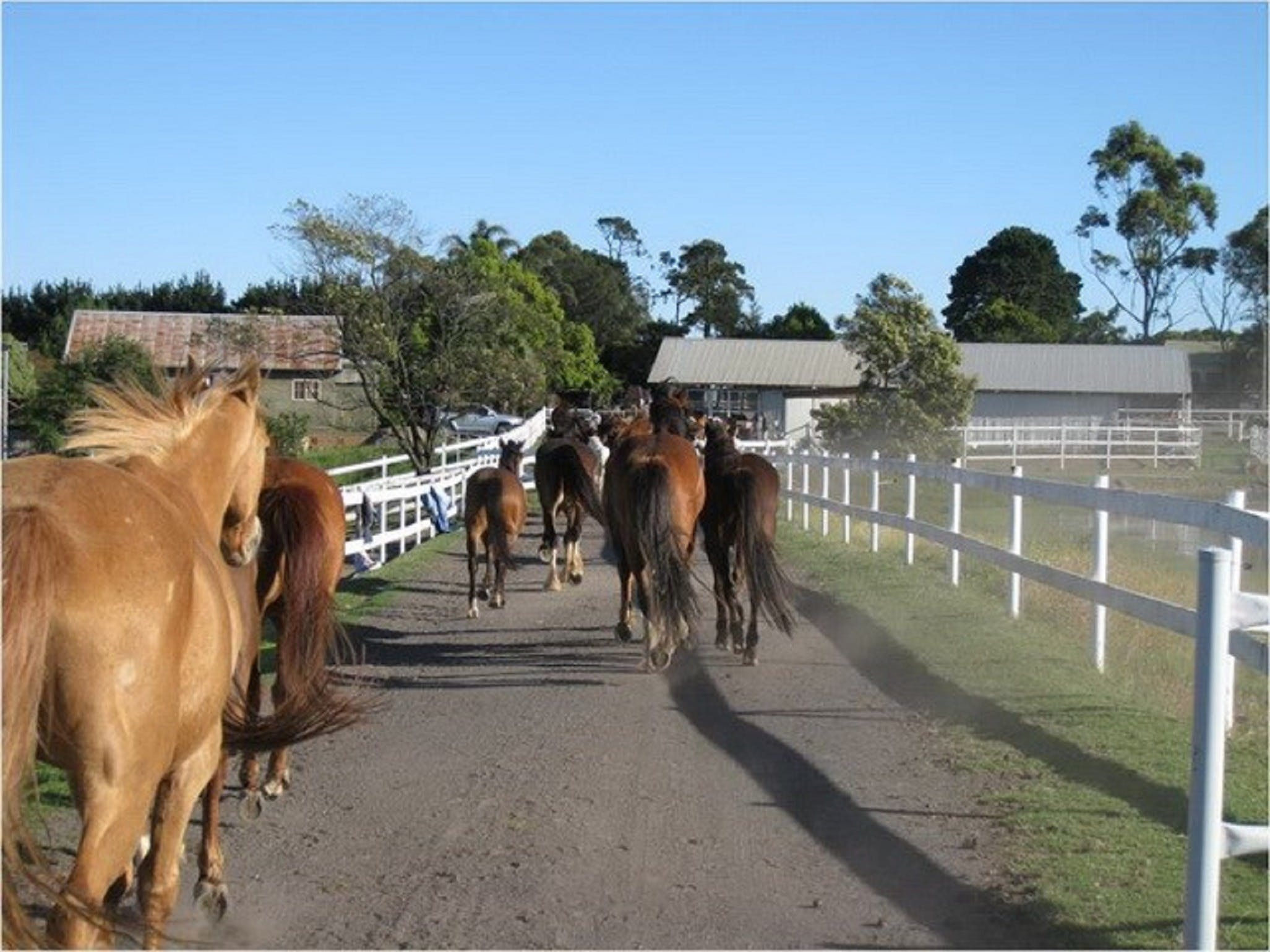 Darkes Forest Riding Ranch - SA Accommodation